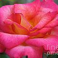 Fresh Floral by Susan Herber