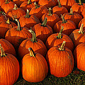 Fresh From The Farm Orange Pumpkins by LeeAnn McLaneGoetz McLaneGoetzStudioLLCcom