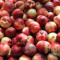 Fresh Nectarines - 5d17813 by Wingsdomain Art and Photography