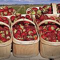 Fresh Picked Strawberries by Randall Nyhof