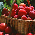 Fresh Red Plums In The Basket by Jeelan Clark