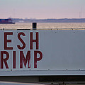 Fresh Shrimp by Paul Wilford
