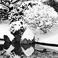 Fresh Snow And Reflections In A Japanese Garden 1 by Greg Matchick