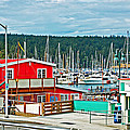 Friday Harbor by Randall Templeton