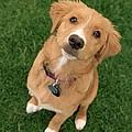 Friendly Dog by Darwin Wiggett