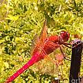 Friendly Dragon Fly by Julie Hiskett