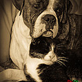 Friendship Is The Greatest Gift Of All Greeting by DigiArt Diaries by Vicky B Fuller
