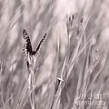 Fritillary Fields by Melissa Moore-Clingenpeel