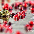 Frog At A Cape Cod Cranberry Bog by Matt Suess
