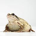 Frog by Darren Woolridge Photography - www.DarrenWoolridge.com