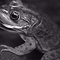 Frog by David Rucker