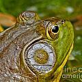 Frog Eye by Lloyd Alexander