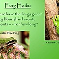 Frog Haiku by Laurel Talabere