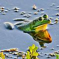 Frog Reflection by Julio n Brenda JnB