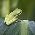 Froggie On A Leaf by Kathy Clark