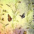 Frolicing Butterflies by Bill Cannon