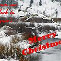 From Our Flock To Yours by DeeLon Merritt