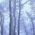Frost Covered Trees In Fog, Alaska by David Nunuk