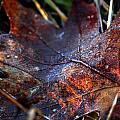 Frosted Fall by LeeAnn McLaneGoetz McLaneGoetzStudioLLCcom