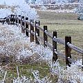 Frosted Fence by Laurisa Rabins