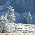 Frosted Morning by Donna Blackhall