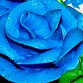 Frosting Rose by Denise Keegan Frawley