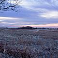Frosty Cape May Meadow by Tom Singleton