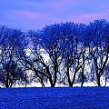 Frosty Trees by Dean Muz