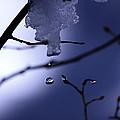 Frozen But Still Wet by Christine Gauthier