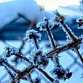Frozen II by Debbie Portwood