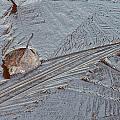 Frozen Leaf by Ulrich Kunst And Bettina Scheidulin