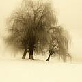 Frozen Trees by Catalin Palosanu