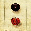 Fruit by Bonnie Bruno