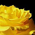 Full Bloom  by Debbie Portwood