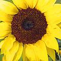 Full Bloom by Heidi Smith
