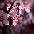 Full Bloom by Vicki Pelham