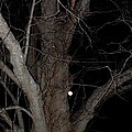Full Moon Beyond The Old Tree by Kim Galluzzo Wozniak