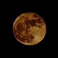 Full Moon by Bruce J Robinson