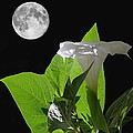 Full Moon Flower by Angie Vogel