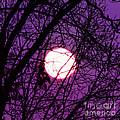 Full Moon by Kim Fearheiley