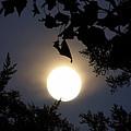Full Moon Late Night Spain  by Colette V Hera  Guggenheim