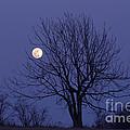Full Moon by Michal Boubin