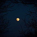 Full Moon On A Winter's Night by Trish Tritz