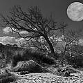 Full Moon Over Jekyll by Debra and Dave Vanderlaan