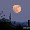 Full Moon Rise Gold Canyon Az by Joanne West