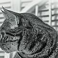 Full Profile Of The Cat - Black-and-white by Alex AG