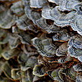 Fungus by LeeAnn McLaneGoetz McLaneGoetzStudioLLCcom