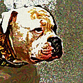 Funky Bulldog by Alice Gipson