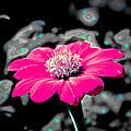 Funky Flower by Steve McKinzie