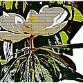 Funky Magnolia by Alice Gipson